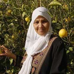 A muslim woman in an orange grove.