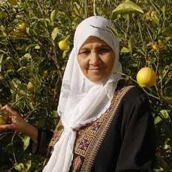 A muslim woman in an orange grove.